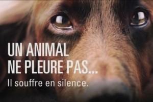 souffrance-animale
